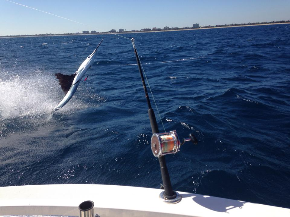 sailfish on hook west palm beach fl