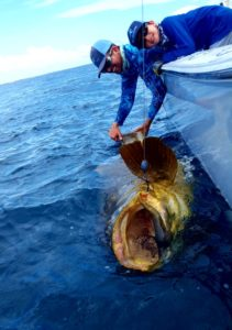 best goliath grouper charters