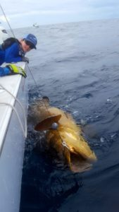 fishing charter for goliath grouper slob city florida