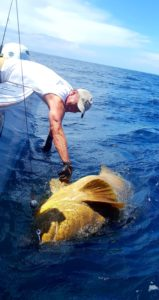 slob city charters goliath grouper fishing
